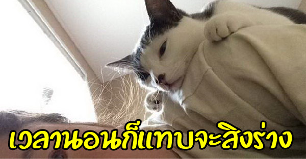 10 เหตุการณ์ไม่คาดฝันที่ทาสแมวอาจได้เจอซักครั้ง