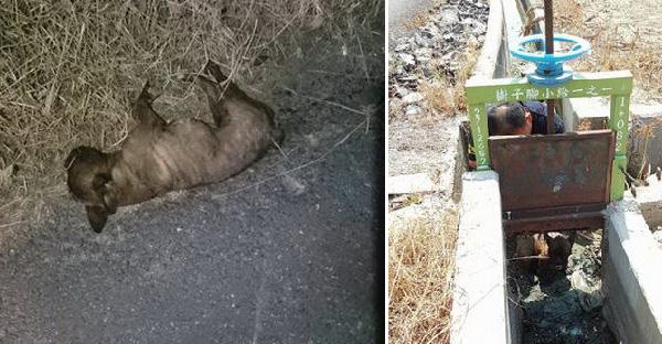 กู้ภัยสัตว์พบลูกสุนัขบาดเจ็บ คาดอาจถูกรถชนหรือโยนทิ้งลงในบ่อโคลน