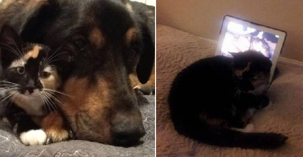 เจ้าของช่วยแมวน้อยซึมเศร้าหลังเสียหมาเพื่อนรัก ให้หายคิดถึงด้วยไอแพด