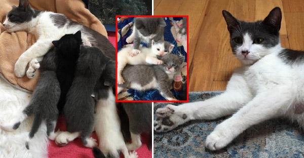 ชายหนุ่มพาแมวจรจัดท้องโตส่งศูนย์พักพิงสัตว์ทันเวลา จึงช่วยชีวิตลูกๆทั้งหมดไว้ได้