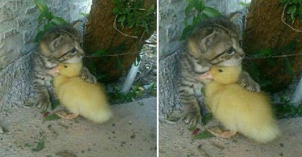 ไม่ต้องกลัวนะ..เราจะปกป้องนายเอง รวมความน่ารักของเหล่าสัตว์โลก ที่จะหลอมละลายคุณแบบไม่รู้ตัว