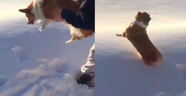 ชาวเนตตกใจแว่บแรกเห็นเป็นหมาถูกโยนจากเครื่องบิน ก่อนจะยิ้มไม่หุบในตอนสุดท้าย