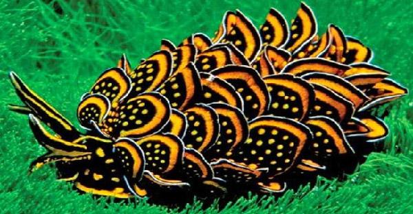 19 สัตว์โลกที่ธรรมชาติสร้างสรรค์ให้หน้าตาไม่เหมือนสายพันธุ์ตัวเอง!