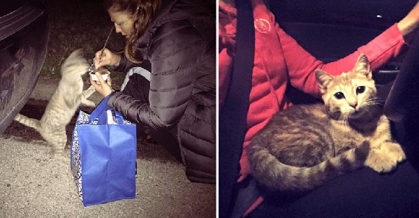 เมื่อแมวจรจัดที่กำลังหิวโซพบหญิงสาวใจดี ชีวิตของมันก็เปลี่ยนไป