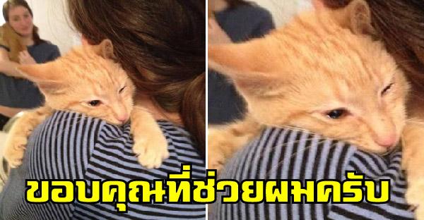 แมวจรดุร้ายถึงกับหลั่งน้ำตา เมื่อถูกพาไปเลี้ยงและสวมกอดเป็นครั้งแรกในชีวิต
