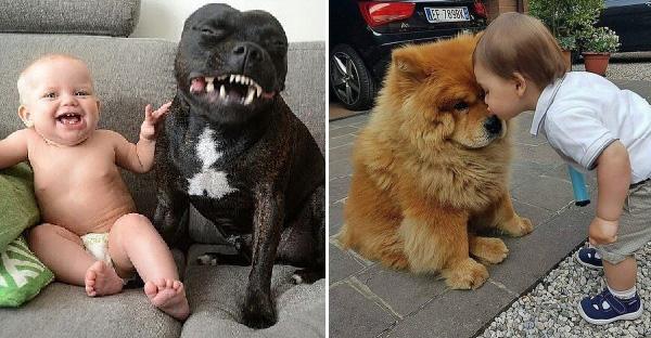 รวมภาพทะเล้นสุดฮาในวัยเด็กกับสัตว์เลี้ยง ที่ดูกี่ครั้งก็ยิ้มได้ทุกที