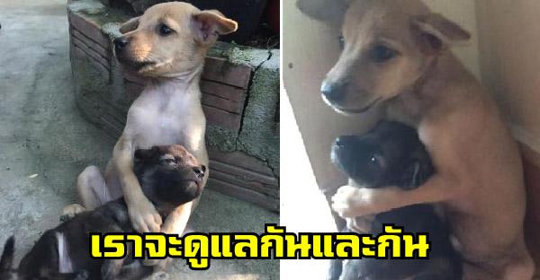 2 สุนัขจรจัดที่ตลอดชีวิตผ่านเรื่องเลวร้าย และไม่ยอมที่จะแยกจากกัน