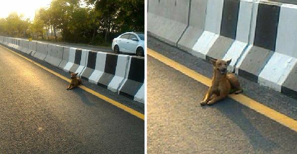 หนุ่มสุดช็อค!! เมื่อพบหมาจรนอนแช่อยู่เลนขวา เขาจึงรีบทำสิ่งนี้ด้วยความเป็นห่วงสุดใจ!!