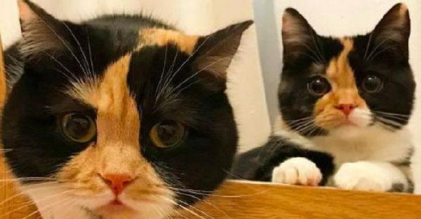คุณแม่กับลูกแมวโทนที่เหมือนกันอย่างกับก๊อปวาง ทั้งหน้าตาและนิสัยเลยล่ะ