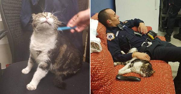 แมวจรจัดหลงเข้าสถานีดับเพลิง แล้วก็กลายเป็นหัวหน้าไปในพริบตา