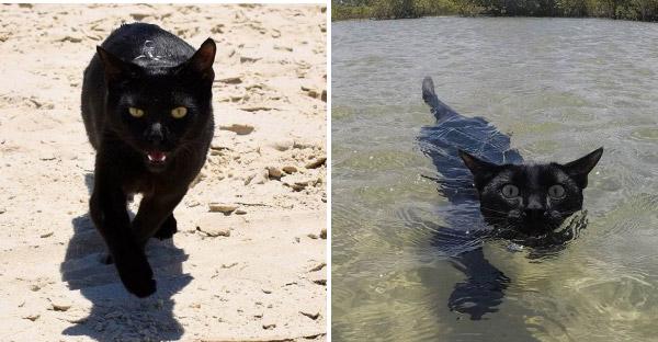 แมวดำที่เคยโดนลอยแพ กลับกลายเป็นเซเลปในไอจี หลังโชว์สกิลว่ายน้ำได้เก่งสุดๆ