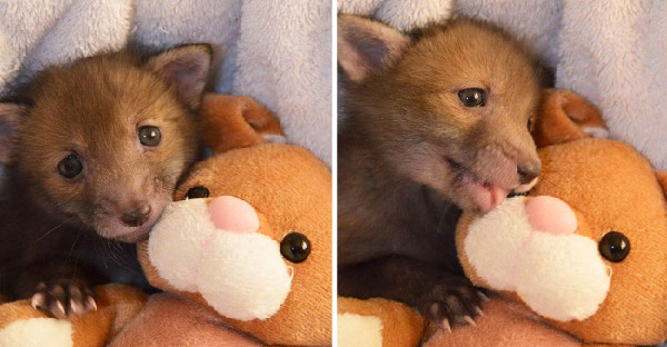 สัตว์โลกน่ารักมาพร้อมกับตุ๊กตาตัวโปรด ที่ใครเห็นเป็นต้องอมยิ้มไปทั้งวัน