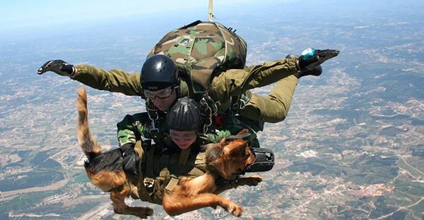 การฝึกฝนของเหล่าสุนัขทหาร ต้องผ่านการทดสอบทั้งร่างกายและจิตใจ