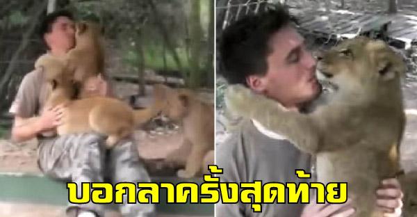 โมเม้นท์ประทับใจของเจ้าหน้าที่ฝึกงานสวนสัตว์ ที่มาบอกลาลูกๆสิงโตที่เลี้ยงมากับมือ