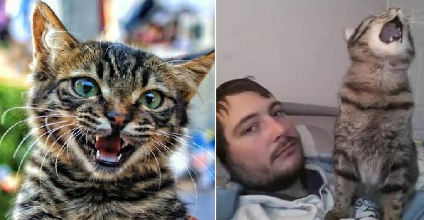 เผยประสบการณ์ชีวิตทาสแมว ที่เคยเจอทุกคนแต่ไม่เคยชินซักที