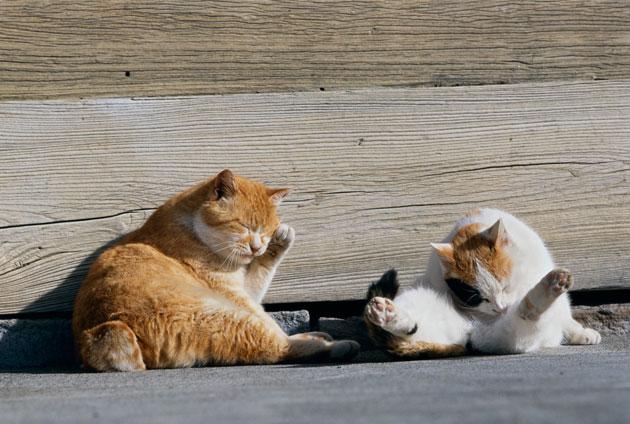 เบื้องหลังการถ่ายทำสารคดีแมวจรจัดของญี่ปุ่น ที่เกิดเหตุการณ์น่ารักจนใจแทบละลาย