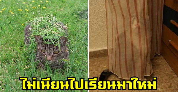 17 แมวเหมียวที่ชอบเล่นซ่อนแอบ แต่ไม่เนียนต้องไปเรียนมาใหม่