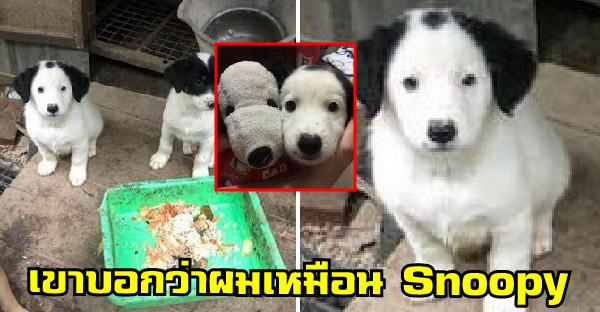 หนุ่มรับเลี้ยงลูกหมาจรจัดจากโรงงาน พอโตขึ้นมาหน้าตาเหมือน Snoopy เปี๊ยบ