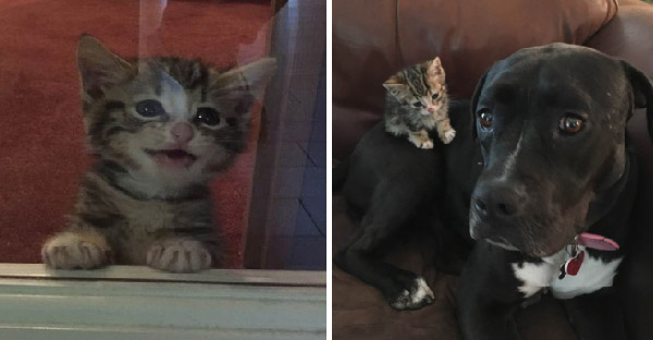 หนุ่มตั้งใจช่วยลูกแมวจรจัดแค่คืนเดียว แต่เจ้าหมายักษ์ทำท่าอยากจะเลี้ยงไว้ตลอดไป