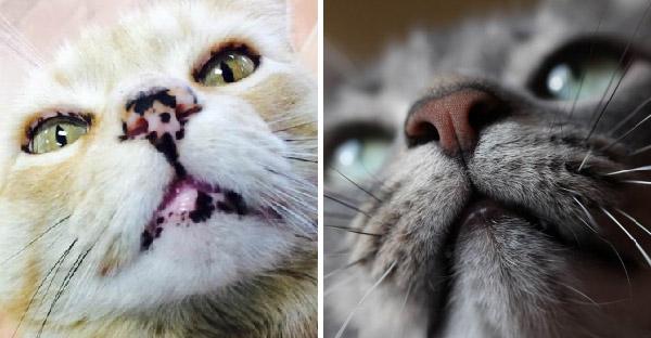แมวแต่ละตัวมีลายจมูกไม่เหมือนกัน ลองชมความแตกต่างแบบซูมชัดระดับ HD