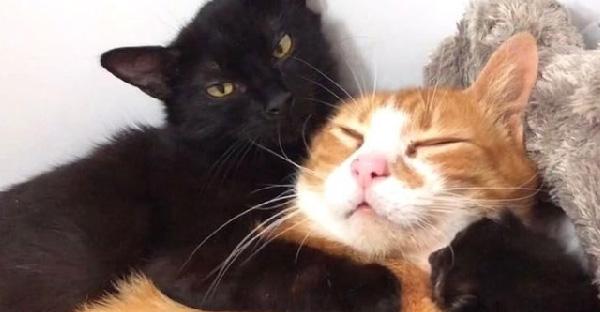 สองแม่แมวคลอดลูกพร้อมกัน ช่วยกันดูแลลูกจนเกิดเป็นความน่ารักสุดๆ