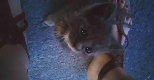 สาวไปเที่ยวทะเลในฝันแต่กลับพบลูกแมวข้างกองขยะ เธออดคิดถึงมันไม่ได้จึงพากลับมาเลี้ยงด้วยที่บ้านซะเลย