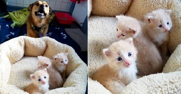 เจ้าตูบช่วยชีวิตลูกแมวถูกทิ้งในคืนฝนตก และกลายเป็นพี่เลี้ยงที่ดีที่สุดในโลก