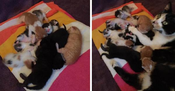 แม่แมวคลอดลูกสี่ตัวรับเลี้ยงลูกกำพร้าอีกห้า จนเติบโตเป็นเก้าพี่น้องน่ารักสุดๆ
