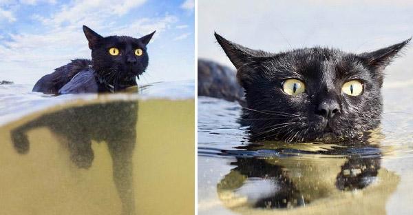 แมวดำที่เคยถูกทอดทิ้ง โชว์ว่ายน้ำเก่งสุดๆ จนกลายเป็นเซเลปที่มีคนติดตามนับแสน