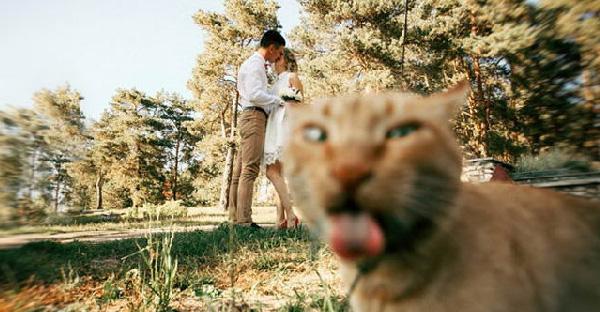 25 ภาพเด็ดของแมวขี้อิจฉา ที่ชอบแอบขโมยซีนจนเด่นที่สุดในภาพ
