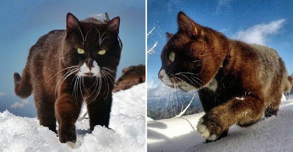 ชายไร้บ้านฝากลูกแมวให้หนุ่มเลี้ยง และเลี้ยงจนเติบโตขึ้นเท่สุดๆไม่แพ้ใคร