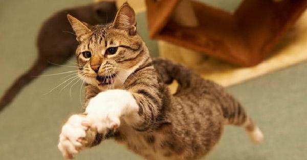 5 วิธีของแมวเหมียวที่ใช้ปลุกคุณในตอนเช้า