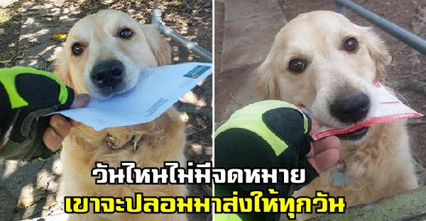 น้องหมามานั่งรอจดหมายทุกวัน ถ้าวันไหนไม่มี บุรุษไปรษณีย์ก็จะปลอมมาส่งให้