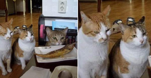 ชาวเนตถามจะกินข้าวลงได้อย่างไร ถ้าเจอแมวนั่งมองกดดันแบบนี้
