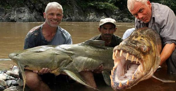 เผยโฉมเหล่าปีศาจแห่งลุ่มแม่น้ำ ที่น่ากลัวเกินบรรยายจากรายการ River Monsters