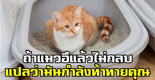 21 เกร็ดความรู้เกี่ยวกับแมว ที่บรรดาทาสควรรู้เอาไว้