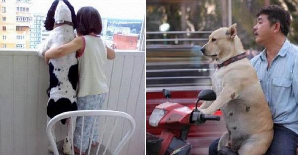 23 เหตุการณ์น่ารักๆของน้องหมาเพื่อนแท้ ที่ทำให้หลงรักเข้าเต็มเปา