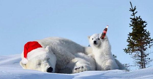 เมื่อภาพลูกหมีขั้วโลกโบกมือทักทาย ถูกชาวเน็ตตัดต่อเพิ่มจนฮาสนั่นบนโลกออนไลน์
