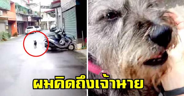 น้องหมาจำเสียงรถมอไซค์เจ้าของได้ ร้องเสียงหลงวิ่งเข้าหาสุดแรง หลังหายตัวไปจากบ้านนานเกือบสัปดาห์