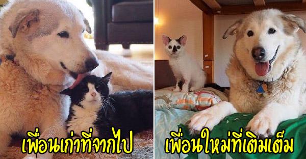 พี่หมาสูญเสียเพื่อนแมวที่สนิทที่สุด ก่อนได้ลูกแมวเพื่อนใหม่ช่วยสร้างรอยยิ้มให้อีกครั้ง