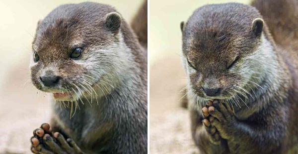 17 หลักฐานเด็ดของสัตว์โลก ที่กำลังสวดมนต์อธิษฐานขอพรจากพระเจ้า
