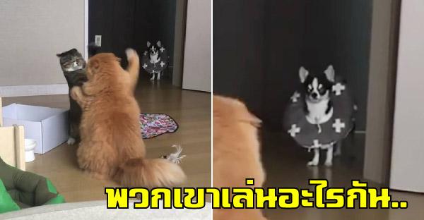 เจ้าเหมียวตบตีกันสนั่น ทำเอาเจ้าตูบที่เดินผ่านมายืนงงในดงแมว