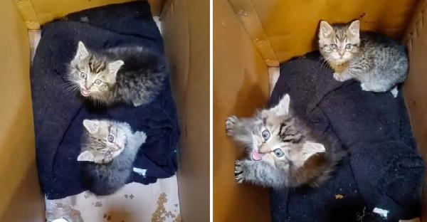 ลูกแมวตัวน้อยร้องให้คนช่วยไม่หยุด เขาตามเสียงไปจึงพบมันในรางน้ำอพาร์ทเม้นท์