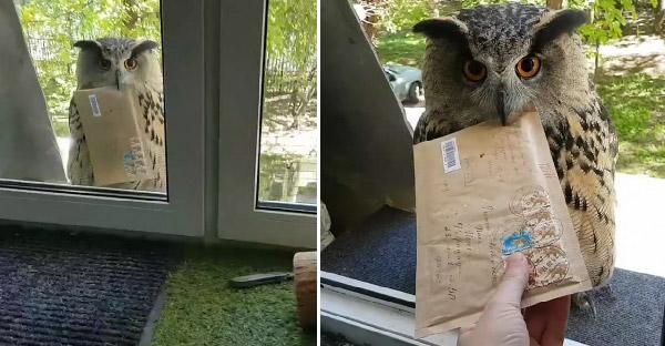 นกฮูกมาส่งจดหมายถึงหน้าต่าง จนถูกแซวว่าส่งมาจากฮอกวอตส์รึเปล่า