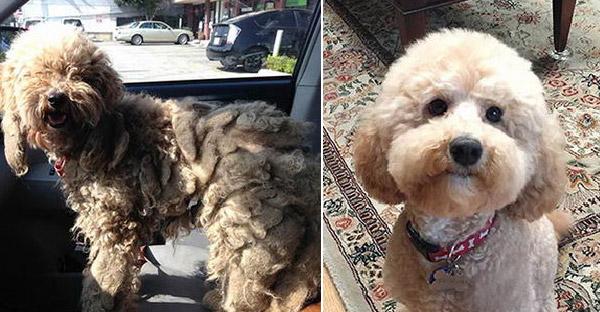 16 เรื่องราวประทับใจของสุนัขข้างถนน ที่ถูกช่วยเหลือจนชีวิตเปลี่ยนไปตลอดกาล