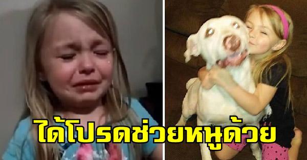 เมื่อสุนัขสุดรักหายตัวไป เด็กน้อยก็ร้องไห้ไม่หยุด จนชาวเนตช่วยกันตามหาจนเจอ