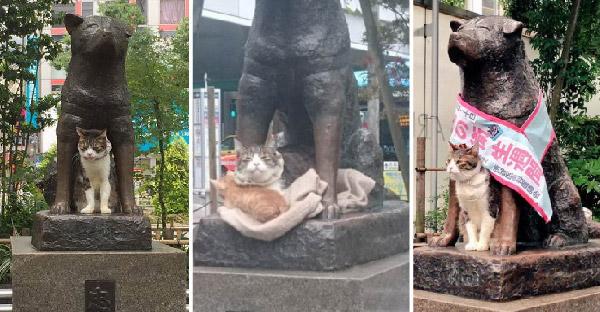 ฮาชิโกะไม่ต้องโดดเดี่ยวอีกต่อไป เมื่อแมวเหมียวโผล่นอนเคียงข้าง
