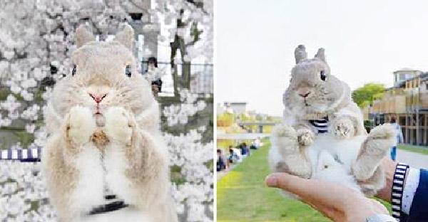 พบกับ kumagoro กระต่ายตัวน้อยที่ออกผจญภัยกับเจ้าของ ทั้งภูเขา ทะเลสาบ และลุยหิมะ