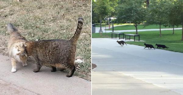มหาลัยแห่งนี้ถูกแมวจรจัดร่วมร้อยครอบครอง แถมมีมนุษย์เลี้ยงดูบูชาอย่างดี