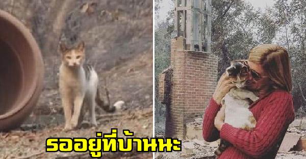 บ้านถูกไฟป่าไหม้ทั้งหลัง แต่เจ้าเหมียวรอเจ้าของอยู่ที่เดิมไม่ยอมไปไหน